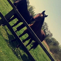 Joy and Shuffle Rescue Horses