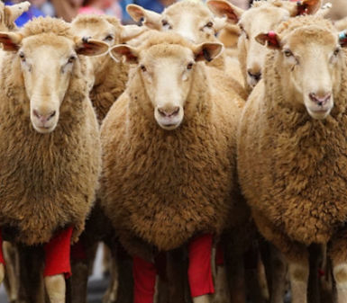 merriwa-festival-of-the-fleeces_orig.jpg