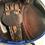 "Thumbnail: 17.5"" Equipe Expression saddle - 2013 - 5"" dot to dot"
