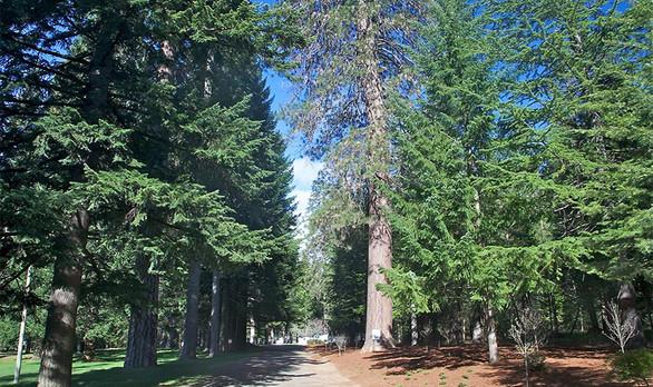 Shasta Springs California