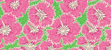 Dianthus Annuals