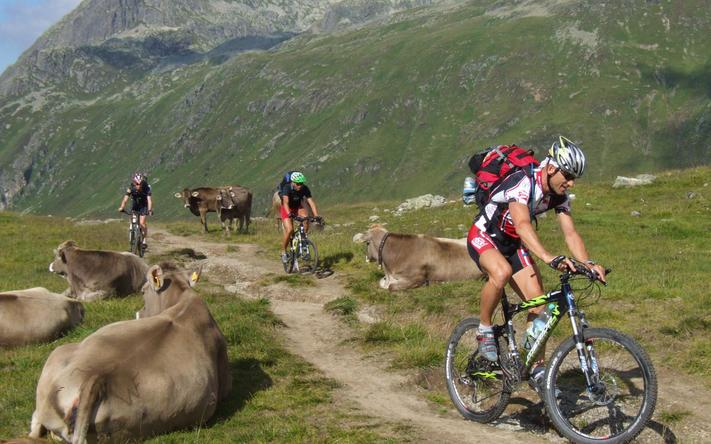 Mountainbikeurlaub für Singles in Österreich
