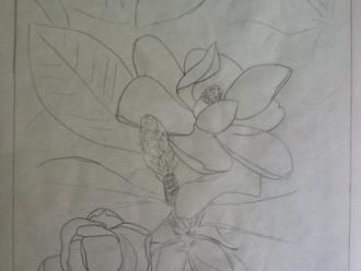 Magnolia Commission