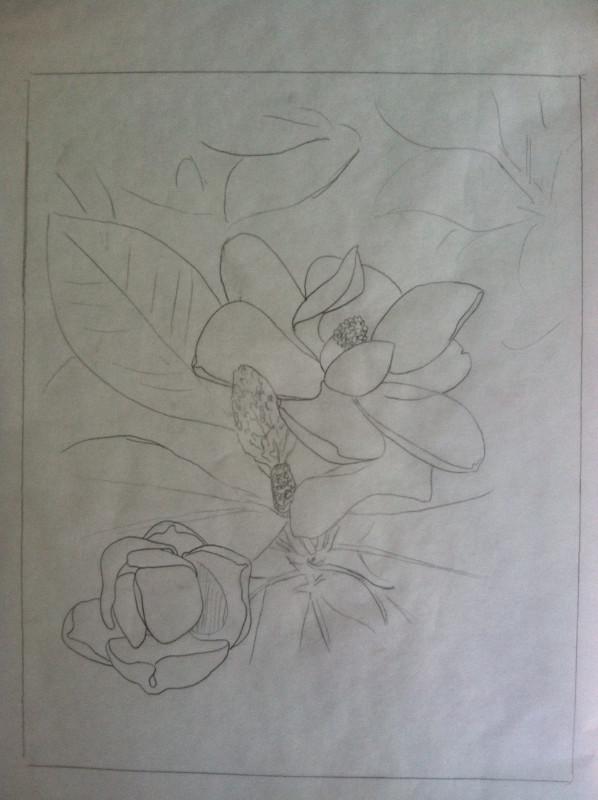 Magnolia line drawing_edited.jpg