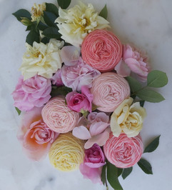 Old English Roses ~ High Summer Collection (Pink Tint)