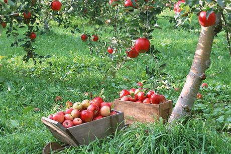 apple-picking-fall-activities.jpg