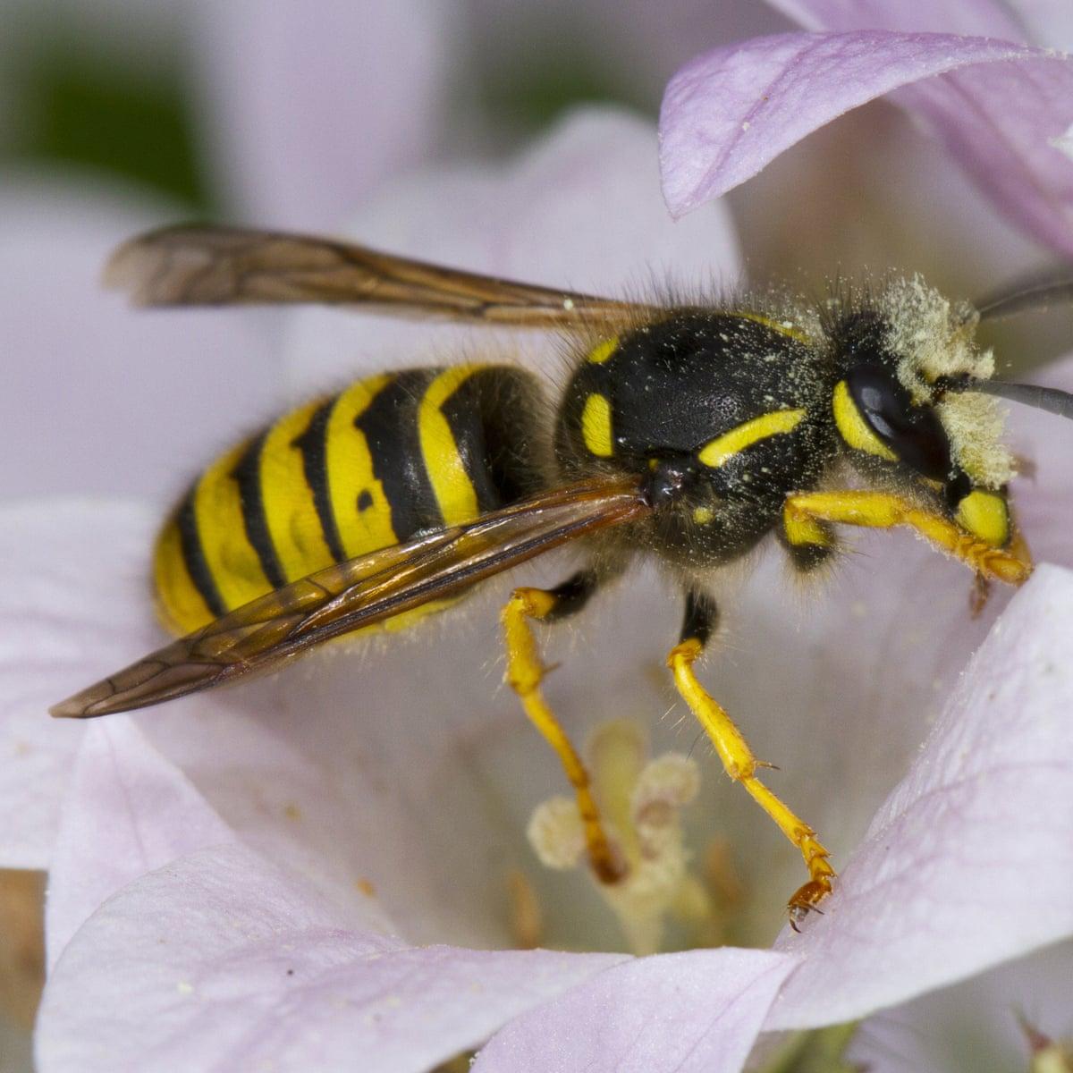 Wasp Nest Treatment Oxfordshire