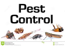 NEW PEST CONTROL.png