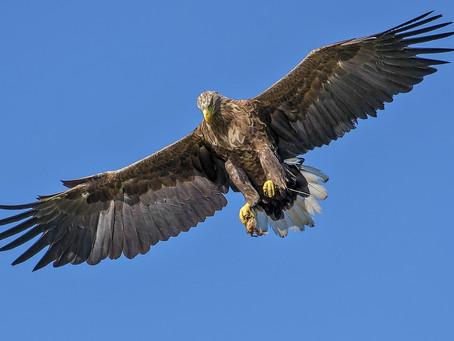 Birds Of Prey & Pest Control-Pro Pest Oxford Ltd