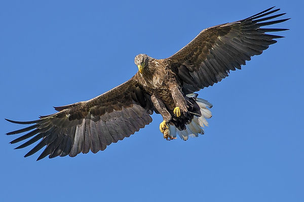 eagle-1753002_960_720.jpg