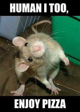 RATS ENJOY PIZZA.JPG