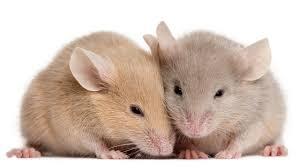 Mice Pest Control Oxfordshire
