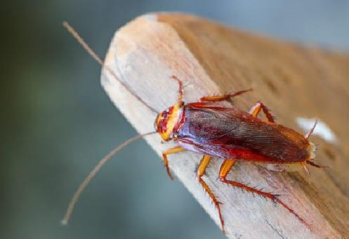Cockroach Pest Control Oxfordshire