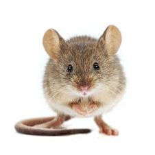 face on mouse.jpg