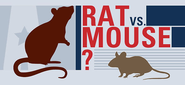 rat-vs-mouse-header.jpg