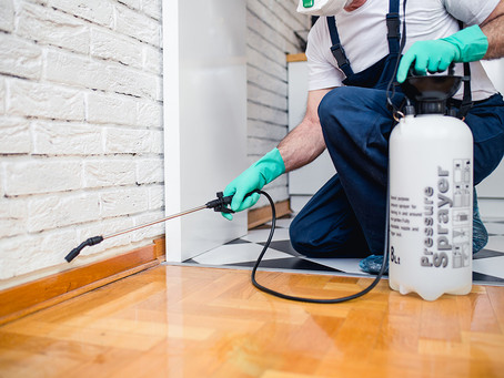 Why is Pest Control Crucial for Businesses During COVID-19?