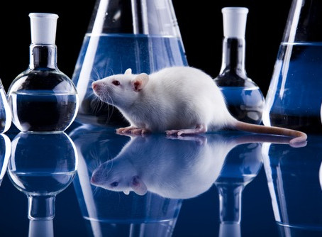 Rat Control Treatment- A Way Out To Get Rid Of Pests!
