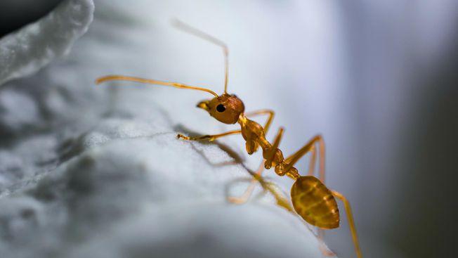 Ants Pest Control Oxfordshire