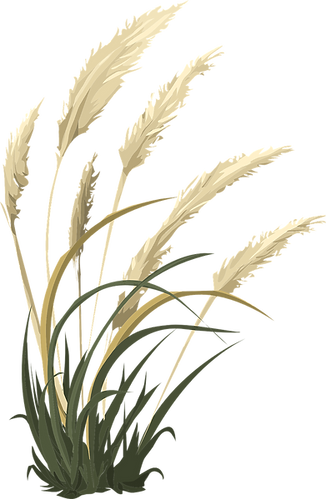wheat-576549_1280.png