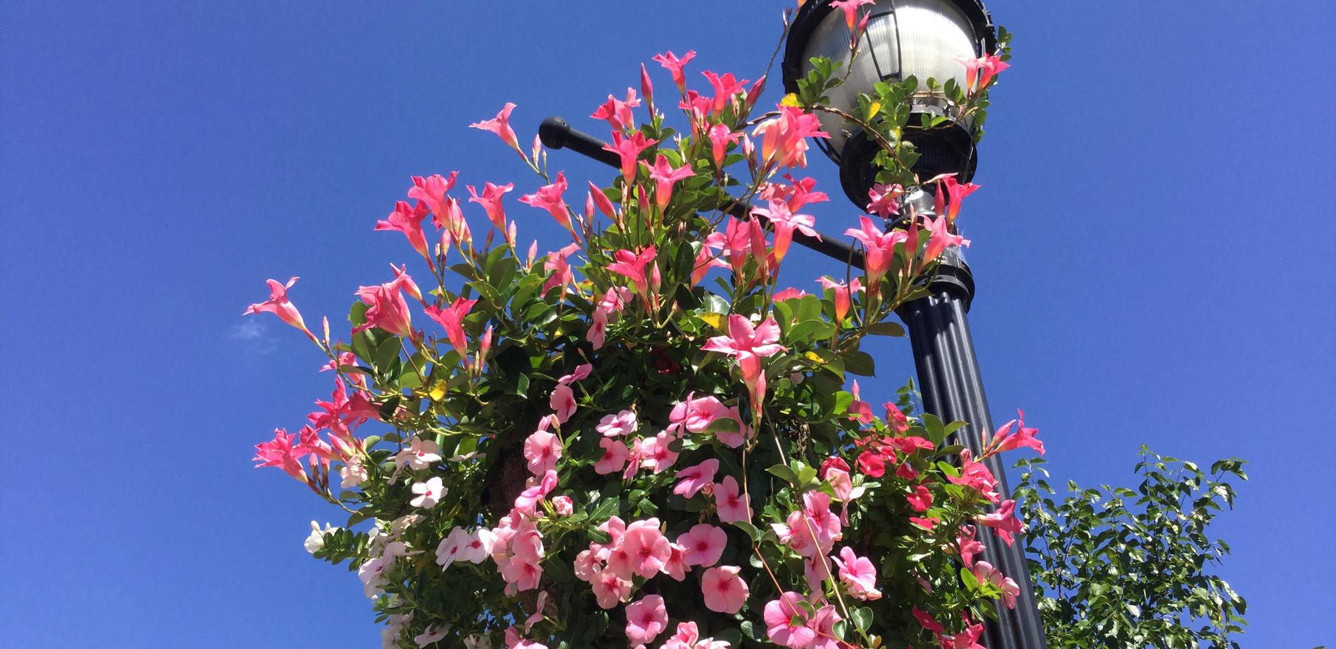 Greensboro Flower Pots