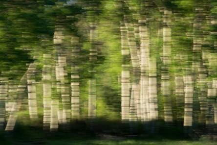 MacClay aspens horizontal blur