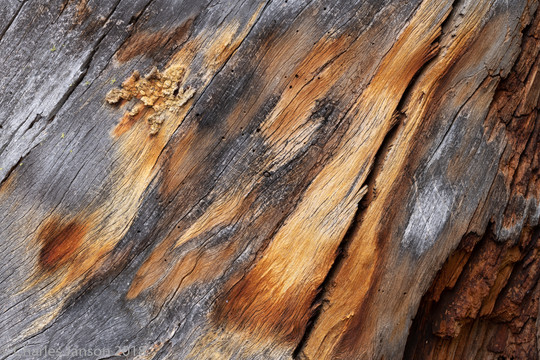 Weathered pine wood