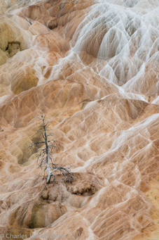 Travertine outflows, Mammoth Hot Springs