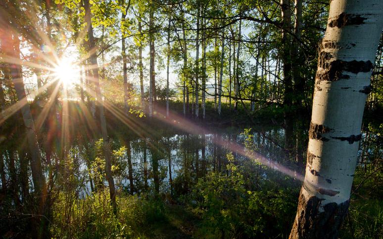 MacClay Flats aspen grove
