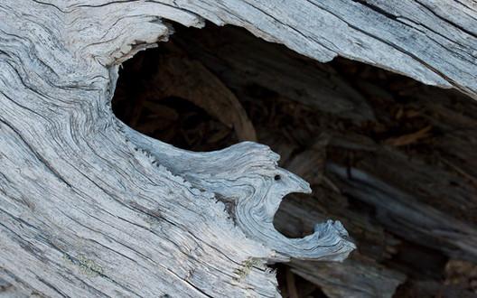 old tree trunk, alpine zone
