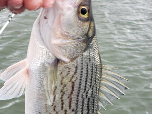 The Bite - Lake Allatoona Fishing report for January 24, 2020