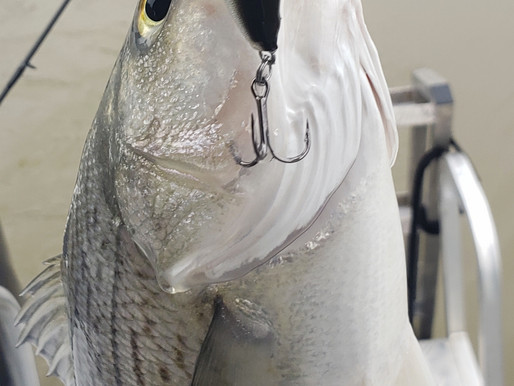 Lake Allatoona Fishing Report for March 5, 2020 - The Bite