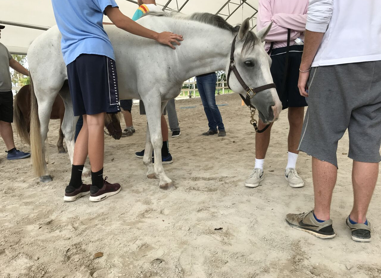 Experiential-Therapy-For-Teens-Equine-Th