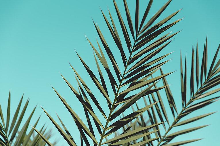 pexels-toni-cuenca-572487.jpg
