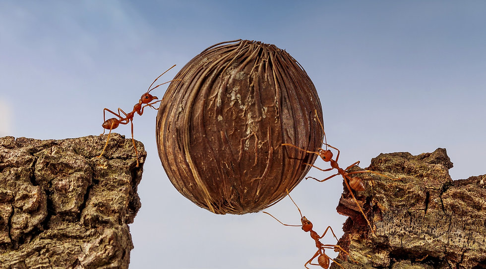 Two ants roll a ball together up a hill