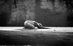 yogame™ | classic