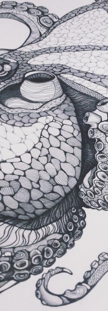 Octopoda I