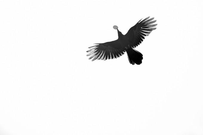"""""""a veces considero esta imagen como un autoretrato""""  Padmasambhava caves.  Tso Pema (Rewalsar) 🇮🇳   Photo © Jonathan Manrique Nossa Este verso pertenece a un poema compuesto por Milarepa durante el siglo XI mientras vivia en una caverna / ermita, y el cual es popular en Tibet. Significa: Si soy capaz de vivir en esta ermita hasta la muerte, sin ser tentado a regresar al mundo, habré alcanzado mi meta espiritual"""""""