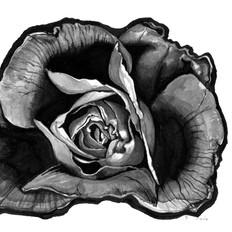 Flor rasgada