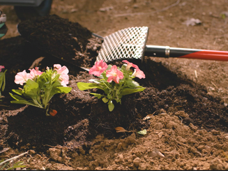 planted soil_edited.png