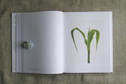 ek_plant_d_3.jpg