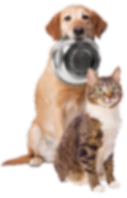 HomePage_DogCat[1].png