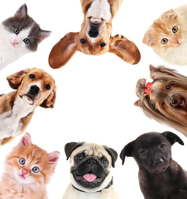 pets[1].jpg