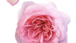 Rose Rose (pétales haché)