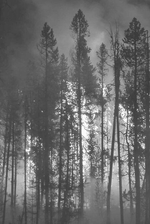 wildfire-forest-fire-blaze.jpeg