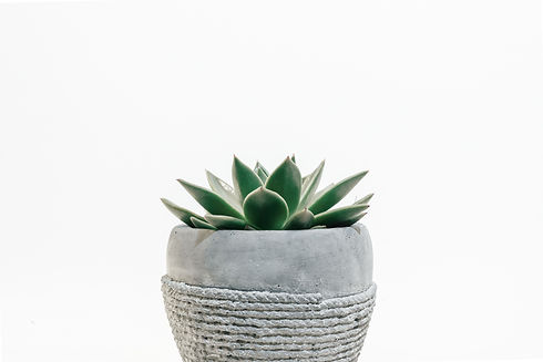 green succulent plant in gray pot_edited.jpg