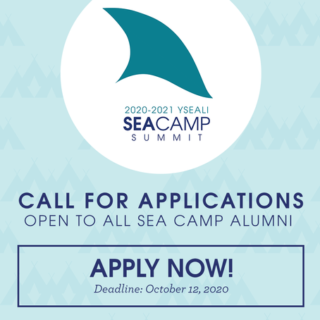 Applications for the SEA Camp Summit and the SEA Campus now open!