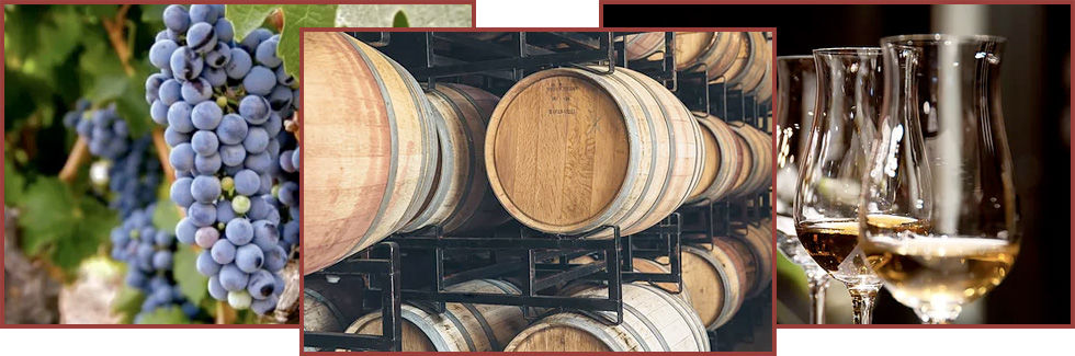 Grapes, Wine Barrels, and Glasses of Win