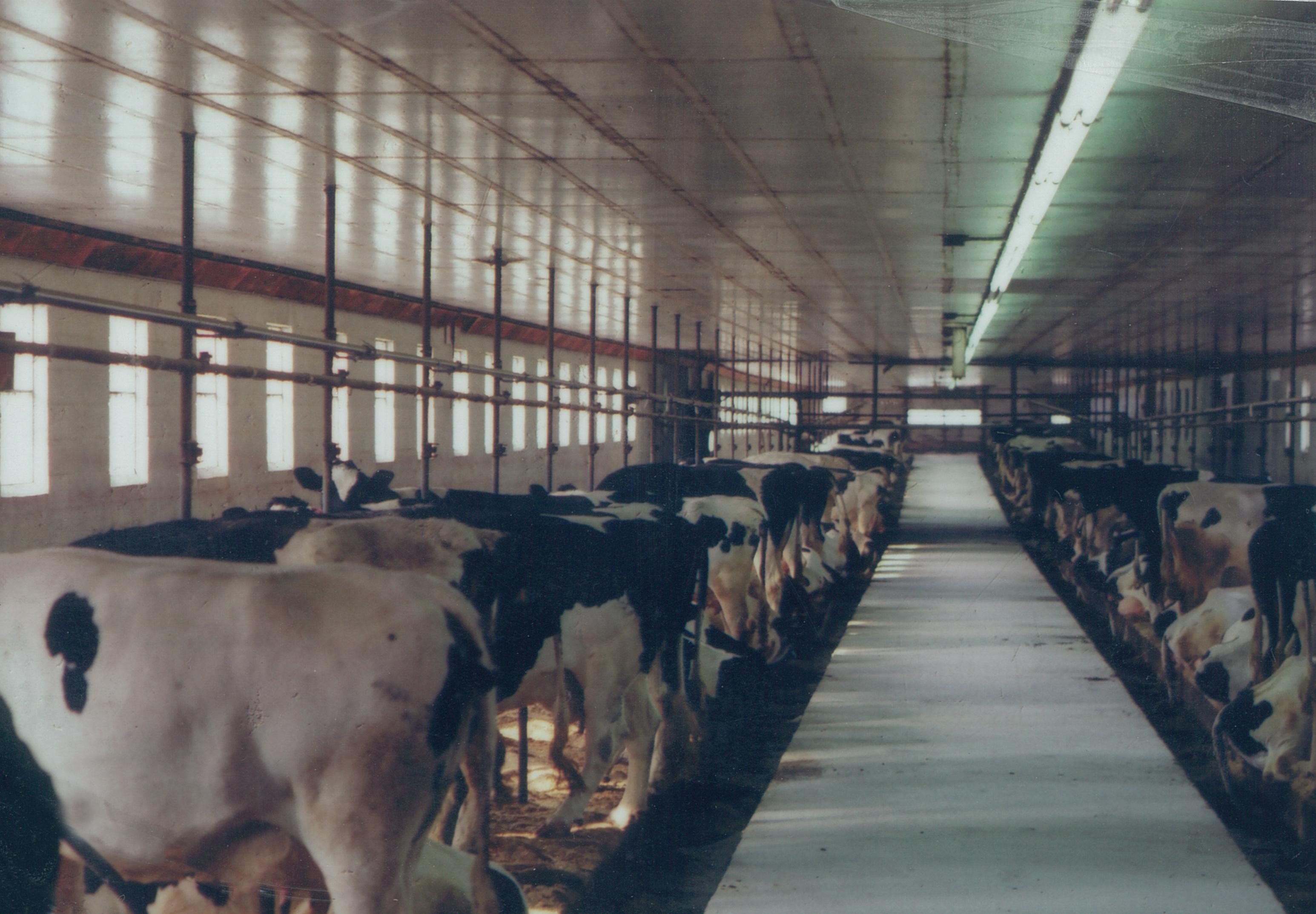old milking parlor.jpg