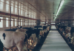 old milking parlor.jpg