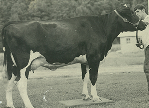 McCarty Standing With Cow.jpg